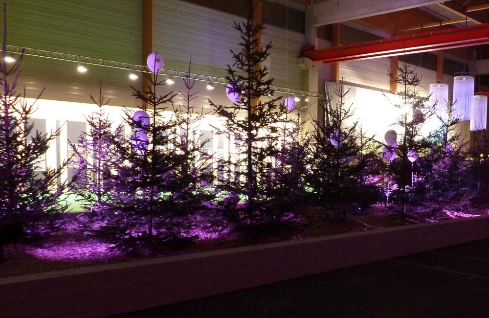 Ambientebeleuchtung, Fotowand Beleuchtung mit HQI Flutern für Holzbau Hasslacher Norica Timber Sachsenburg